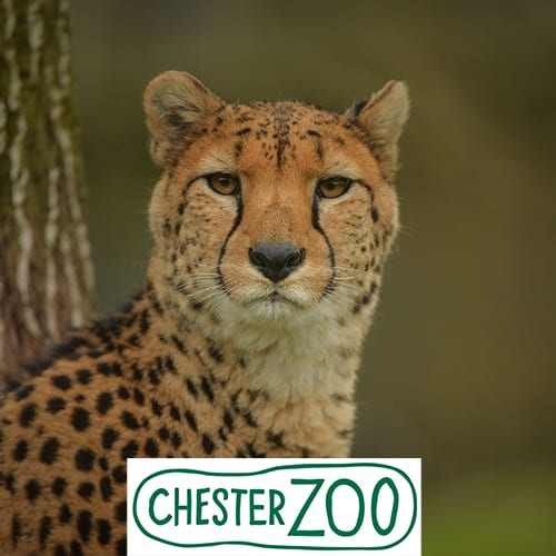 Presentation from Chester Zoo CEO